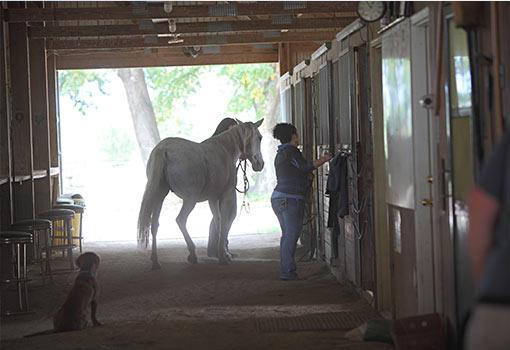 brushing horse