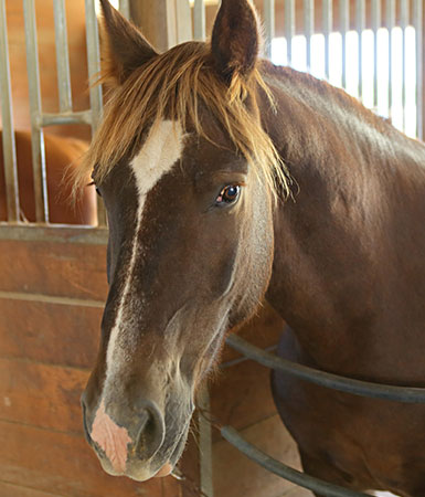 Equine therapy horse - Justice